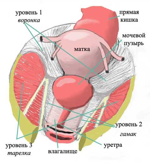 Пролапс (опущение) тазовых органов